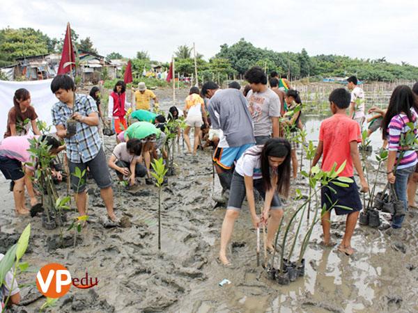 Hoạt động trồng Đước cứu rừng thường niên của LSLC Philippines